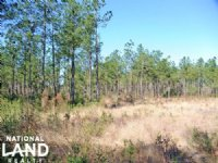 Secluded Streamside Homesite