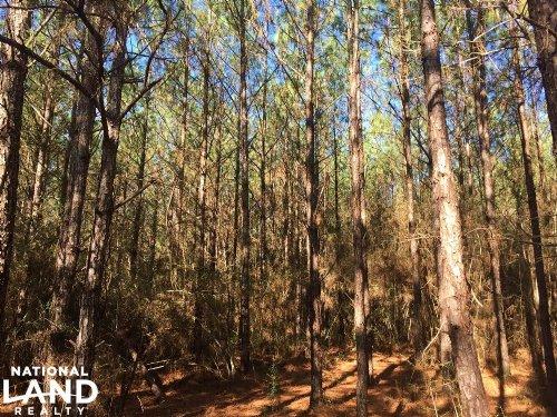Brantley Recreational Hunting Land : Brantley : Crenshaw County : Alabama