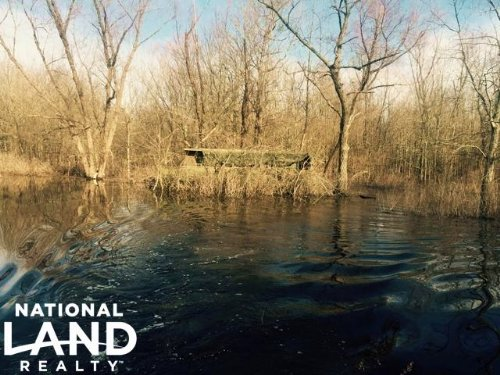 80 Acre Flooded Green Timber Duck : Humnoke : Lonoke County : Arkansas