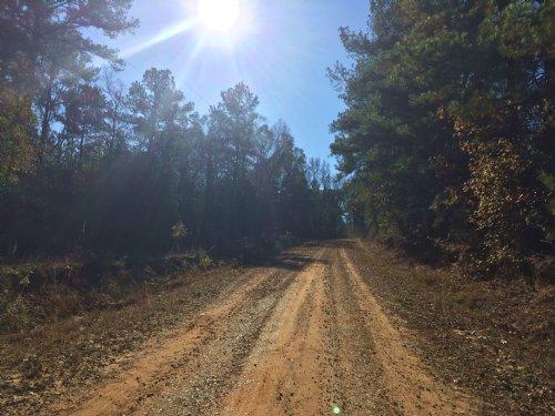 Buckhorn Tract : Banks : Pike County : Alabama