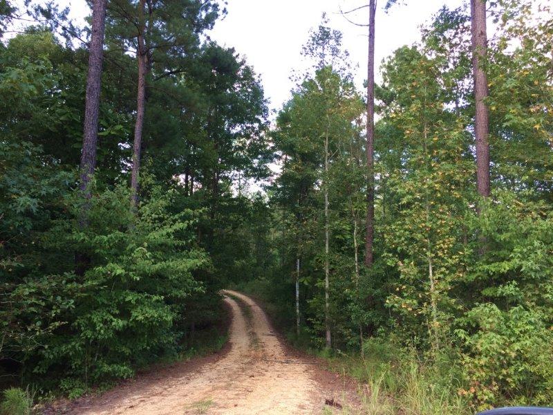 Cameron Chapel Tract : Brantley : Crenshaw County : Alabama