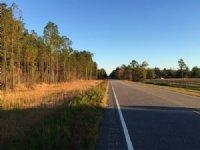 Goat Hill Tract : Samson : Geneva County : Alabama