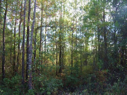 54 Acre Hunting & Timber Tract : Bay Saint Louis : Hancock County : Mississippi