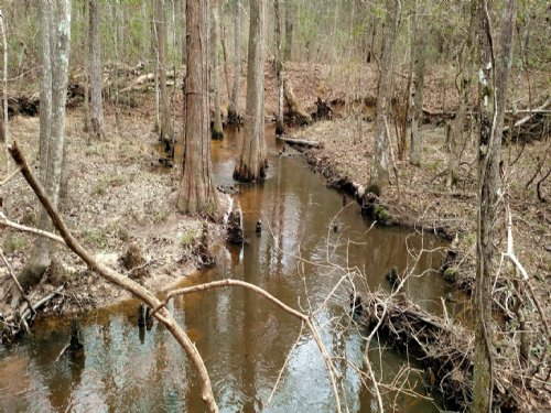 Cypress Creek Farm : Wrightsville : Johnson County : Georgia