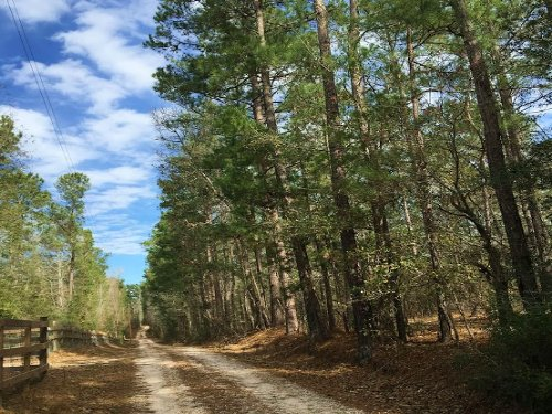 18.18 Acres Hopkins Rd. : Oakhurst : San Jacinto County : Texas