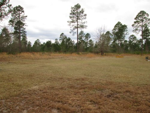 169 Acres Ideal For Hunting : Millwood : Ware County : Georgia