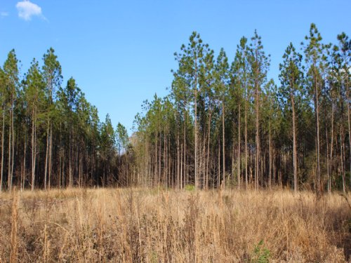 7.5 Acres - Lot 12 - Tall Pines S/D : Starke : Bradford County : Florida
