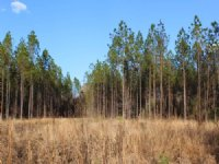 7.5 Acres - Lot 12 - Tall Pines S/d