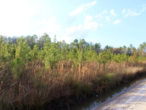 11 Acres - Lot 13 - Tall Pines S/d : Starke : Bradford County : Florida