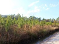 11 Acres - Lot 13 - Tall Pines S/d