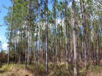17 Acres - Lot 16 - Tall Pines S/d