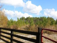 31 Acres - Lot 7 - Tall Pines S/d