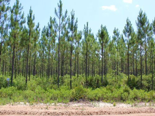 13.22 Acres - Lot 10 - Goodwin Road : Hilliard : Nassau County : Florida