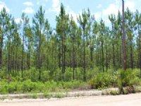 13.69 Acres - Lot 9 - Goodwin Road : Hilliard : Nassau County : Florida