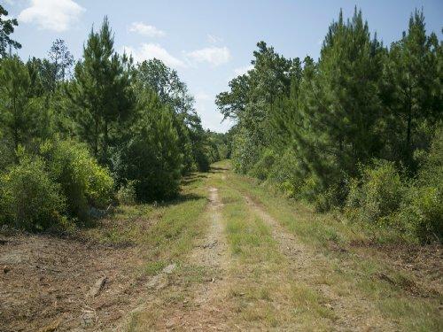 45 Acres Lovelady : Lovelady : Houston County : Texas