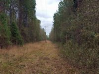 34.48 Acres : Darlington : Darlington County : South Carolina