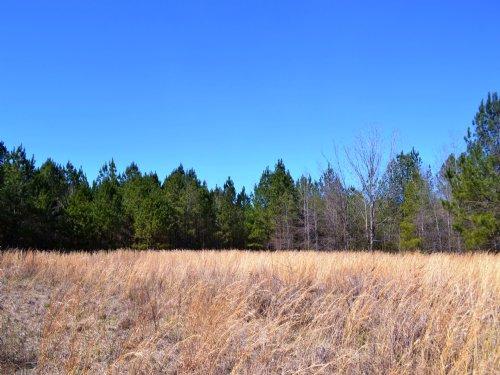 Gp Farms 159 +/- Acres : Hurtsboro : Bullock County : Alabama
