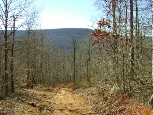 Secluded, Timber Value, Homestie : Sherwood : Franklin County : Tennessee