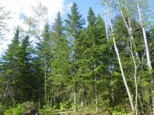 56.39 Acres For Sale : Grand Isle : Aroostook County : Maine