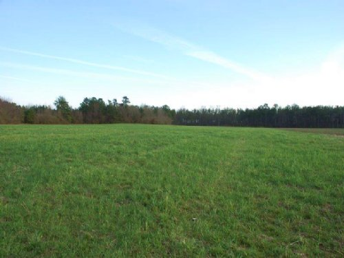 Nice Farm And Timberland Tract : St. Pauls : Robeson County : North Carolina