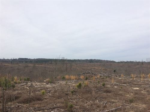 Commissioner Creek Timberlands : Irwinton : Wilkinson County : Georgia
