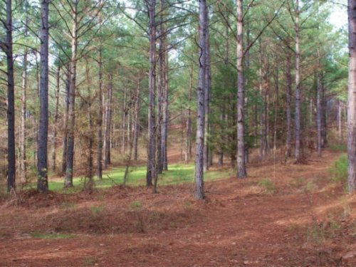 143 Acres In Choctaw County : French Camp : Choctaw County : Mississippi