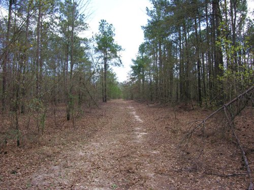 152 Acres Wooded : Blythe : Burke County : Georgia