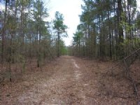 152 Acres Wooded : Blythe : Burke County : Georgia