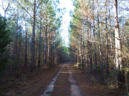 Rhyne Properties, Llc Tract : Warrenton : Warren County : North Carolina