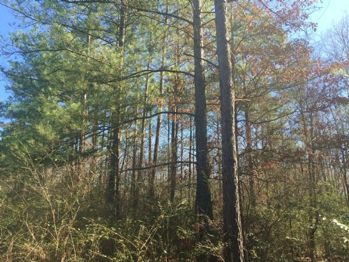 12 Ac In Hunter Lake Estates : Crystal Springs : Copiah County : Mississippi