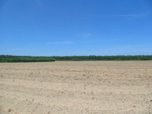 307 Acres Cultivated & Wooded : Waynesboro : Burke County : Georgia