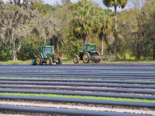 Severt Farm : Zolfo Springs : Hardee County : Florida