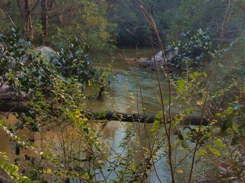 Bear Creek Tract : Ozark : Dale County : Alabama