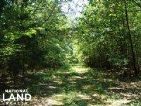 583 Acres Rice Farm & Timber Land