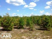 Latta Recreational Timber Acreage