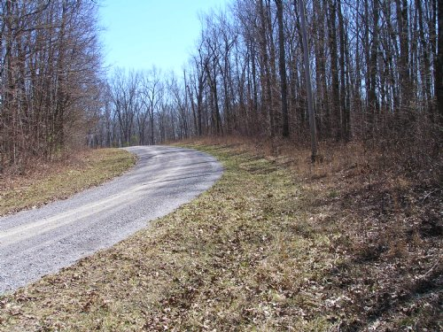 5 Wooded Secluded Acres, Homesite : Pikeville : Bledsoe County : Tennessee