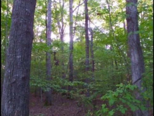 89 Acres In Choctaw County : McCool : Choctaw County : Mississippi