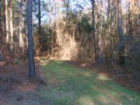 116 Acre Timber / Hunting Property : Buena Vista : Marion County : Georgia