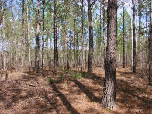 Hunting And Timber Investment : Buena Vista : Marion County : Georgia