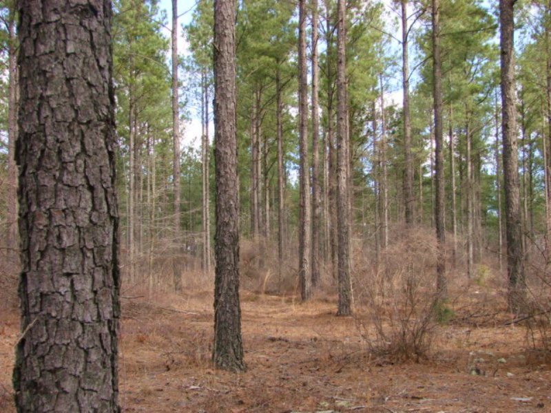 Timber Investment Property : Butler : Taylor County : Georgia