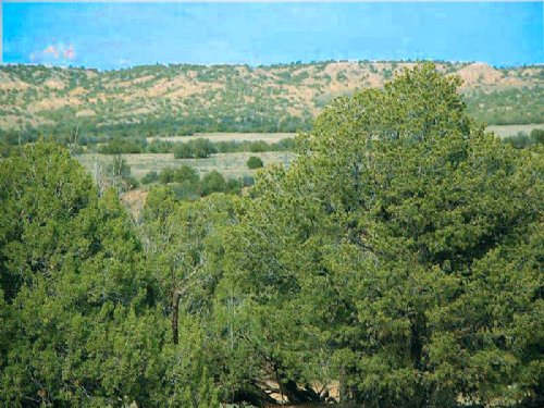 Northern Az Wilderness Ranch 240 Mo : St. Johns : Apache County : Arizona