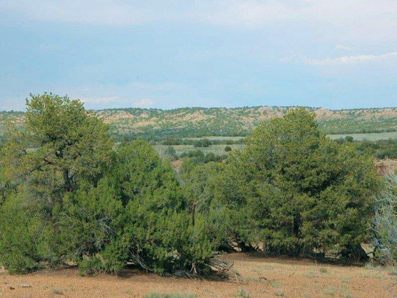 Northern Az Wilderness Ranch 240 Mo : St. Johns : Apache County : Arizona