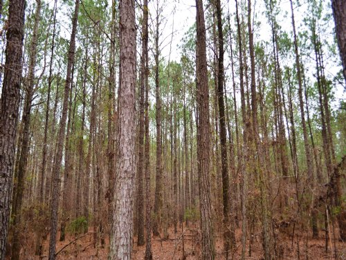 Mathews 15.84 +/- Acres : Mathews : Montgomery County : Alabama