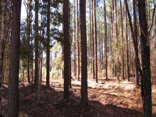 Hunters Retreat West : Ridgeville : Dorchester County : South Carolina