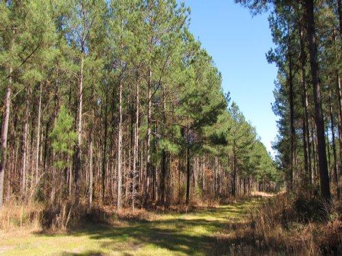 Cotton Hall - East Edisto : Ravenel : Charleston County : South Carolina