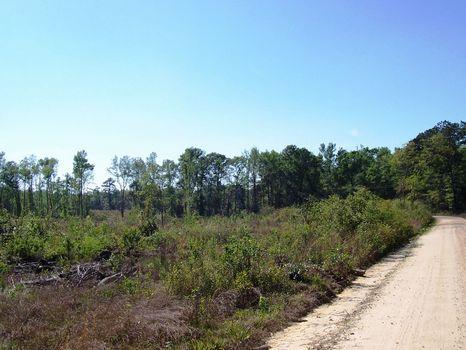 Ramhorn Tract - Price Reduced : Cummings : Hampton County : South Carolina