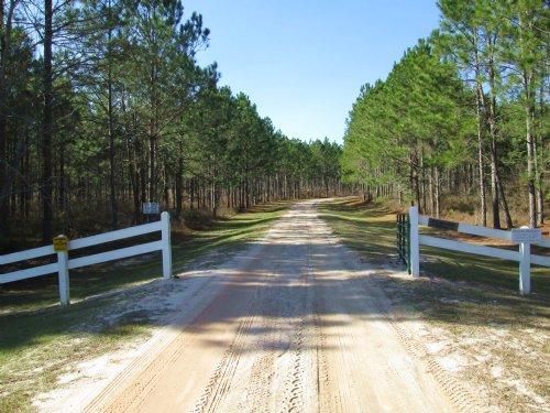 Pond View Gentleman Farm Or Timber : Blackshear : Pierce County : Georgia