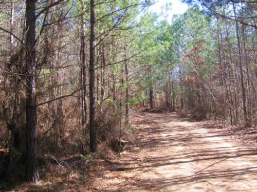 35 Ac Recreational / Timber Tract : Hazlehurst : Copiah County : Mississippi