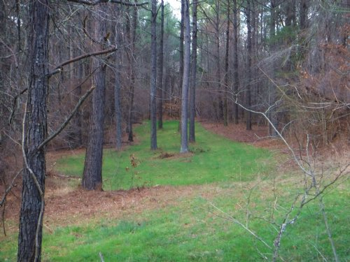 Prime Hunting & Timber Tract : Lexington : Holmes County : Mississippi