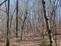 55 Acres Of Wooded Hunting Land